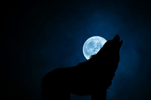 wolf-3022813_640